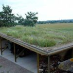 SmallGrassRoof_1